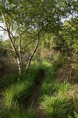 Lytchett Bay (arripay) Tags: nature bay harbour path wildlife reserve dorset trust birch poole upton lytchett