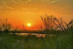 Marismas. Punta del Moral (Huelva) (Angela Garcia C) Tags: marisma paisaje relieve orografa vegetacinderibera nubes puntadelmoral huelva vegetacin hidrologa geografafsica
