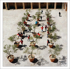 La Vieille Charit, Marseille (me*voil) Tags: trees people plants shadows action games courtyard olives lavieillecharitmarseille