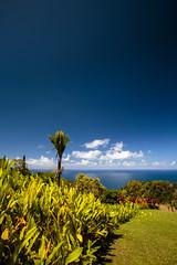 IMG_0041.jpg (Michele Stocco) Tags: hawaii gardenofeden 2016 mauiroadtohana