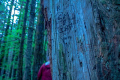 who is R? (kiannatrew) Tags: tree love nature heart memories hike carve adventure pnw rattlesnaketrail
