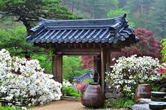 Garden of Morning Calm, South Korea (NgoPhotographyPlz) Tags: morning garden south korea calm chapyeong