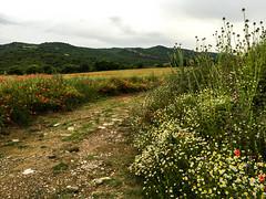 Montsec, Vilanova de Mei (efe Marimon) Tags: flores lleida lanoguera amapolas montsec vilanovademei garola felixmarimon appleiphone6s