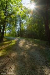 Bosco Romagno. Romagno wood. (omar.flumignan) Tags: wood sun nature foglie alberi canon walking eos three natura 7d sole fvg bosco passeggiata friuliveneziagiulia ef24105f4lisusm romagno