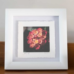 Deckle edge float mounted (justjimwilldo) Tags: shadow flower print box framed mounted deckleedge