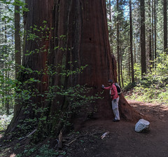 Big Tree / Margo (ex_magician) Tags: pictures california tree giant photo interesting image grove photos hiking picture merced roadtrip adobe yosemite wife yosemitenationalpark sequoia margo lightroom moik sequoias yosemitetrip adobelightroom mercedgroveofgiantsequoias