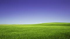 Green field (3dRabbit) Tags: green field farm glass blue simple minimul canon 5dmarkiii day noon wa palouse usa nature landscape