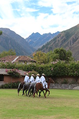 IMG_6868 (University of Pennsylvania Alumni) Tags: peru machu picchu cuzco llama