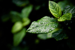 Nature (Zeeyolq Photography) Tags: green nature ecology leaf environment