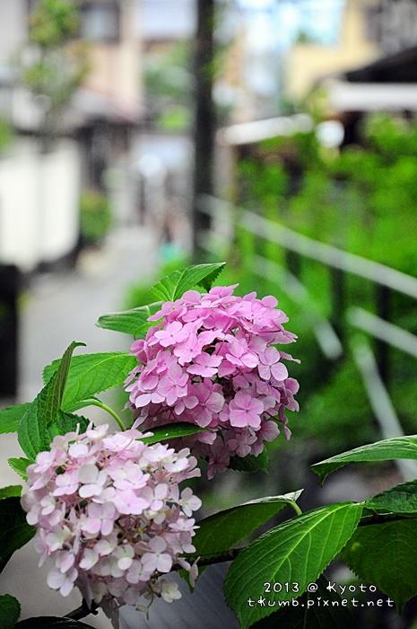 2013藤森神社13.jpg