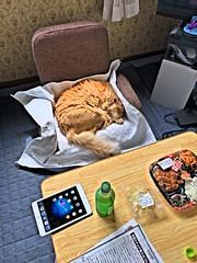 Nobuo's Pre-Lunch Nap (sjrankin) Tags: hdr japan hokkaido yubari tea food animal cat nobuo edited 7july2016