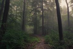 Silent Touch (Netsrak) Tags: trees light shadow mist tree green leaves fog forest way de landscape deutschland licht leaf haze woods nebel outdoor path walk grn blatt landschaft wald bltter bume schatten baum nordrheinwestfalen weg wanderung dunst wanderweg rheinbach forst