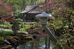 clingendael-7702 (Arie van Tilborg) Tags: japanesegarden hague thehague clingendael japansetuin clingendaelestate landgoedclingendael arievantilborg