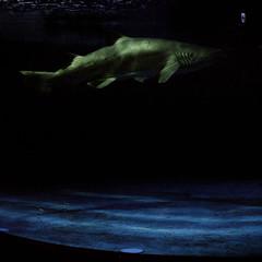 (shimobros) Tags: color 120 film japan aquarium lomo lomography negative bronica squareformat shinagawa sq 800 basic 150m  zenza adobelightroom