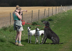 How to Take a Group Photo (Shastajak) Tags: me pentax whippet bullterrier k5 saluki scottishdeerhound lurcher deerhound ishmael flori tamron28300mm takenbydom pentaxk5 sqlpronouncedsequel