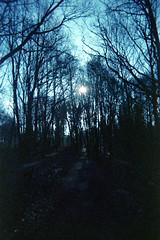 Woods (Saturated Imagery) Tags: blue lomography woods toycamera grain leeds madeinitaly expiredfilm meanwood meanwoodpark ferraniasolaris200 epsonv500 boots200 photoshopelements9 leclicfunshooterfs30