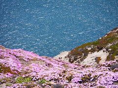 Point Reyes (Julien_V) Tags: ocean california park pink usa flower fleur rose pacific pointreyes parc californie ocan pacifique