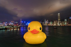 Rubber Duck, Welcome to HK~ :) (Ali Tse) Tags: hongkong duck publicart  rubberduck tsimshatsui duckie rubberduckie  yellowduck  giantduck florentijnhofman yellowduckie dutchartist victoriasharbour rubberduckproject hkrubberduck