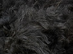 Ostrich feathers. (Jn Belitkov) Tags: bw bird canon photography grey zoo feathers ostrich bnw
