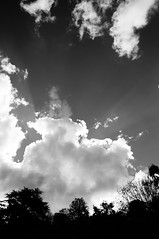 black and white sky (thunderfortune) Tags: sky blackandwhite sun tree silhouette clouds beams sonynexf3