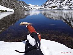 Lago de Isoba, Len , Espaa (Caty V. mazarias antoranz) Tags: espaa primavera spain nieve lagos zapatos mayo gafas len reflejos botas lagunas hierba ranas pis isoba lagodeisoba estacindesanisidro lagunasdelen
