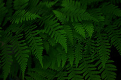 FERN STUDY (Jeka World Photography) Tags: plants fern nature outdoors arkansas ozarks ozarkmountains alumcove jekaworldphotography jeffrosephotography
