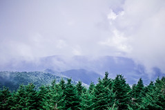 smoky mountains tree tops (DigiDreamGrafix.com) Tags: park blue summer sky panorama usa mountain tree beautiful grass sunshine clouds forest landscape highlands woodlands scenery view cloudy hill great peak sunny national valley mountainside noon smoky grassland tranquil glade