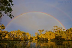 Consolation Rainbow (rQQzy) Tags: morning trees light sky water rain sunrise reflections shower rainbow arch lagoon