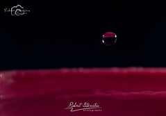 Droplet photography 10 (Robert Stienstra Photography) Tags: water droplets drops droplet waterdrops waterdropphotography dropletphotography robertstienstraphotography