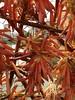Miratges - Paral·lel - Girona Temps de flors 2013 (artesaniaflorae) Tags: girona 2013 paral·lel miratges httpwwwparalelespaicom jukkaheinonen gironatempsdeflors2013 elpontdelespeixeteriesveilles