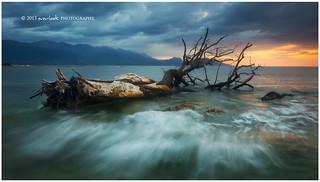 Tidal Tree