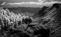 Canary Mountains (McSnowHammer) Tags: trees bw mountains ir islands spain rocks view hike cliffs pines valley infrared gran canary canaria