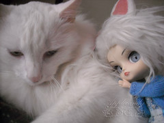 DSCN77026_Dal_Tezca_ (applecandy spica) Tags: blue white cute cat fur eyes furry kitten chat doll soft tail kitty fluffy dal ears pullip katze paws lovely custom fatcat chubby weiss gatto bianco blanc kittie ktzchen micio chaton gattino weis soffice peloso morbido gattone micetto micione gattochiatto tezca
