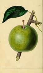 n99_w1150 (BioDivLibrary) Tags: fruitculture greatbritain periodicals umassamherstlibrariesarchiveorg bhl:page=21999551 dc:identifier=httpbiodiversitylibraryorgpage21999551 artist:name=augustainneswithers artist:viaf=95819243 taxonomy:binomial=pyruscommunis womeninscience augustainneswithers q2870951 illustrator:wikidata=q2870951 hernaturalhistory