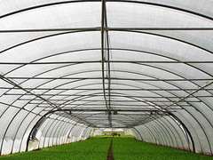 Greenhouse Tunnel (Batikart) Tags: light summer people urban food white plant black green art nature leaves canon germany geotagged outdoors deutschland vanishingpoint leaf salad europa europe day arch angle sommer linie natur pflanze harvest tranquility arches conservatory symmetry line diagonal plastic growth lettuce greenhouse grn curve ursul