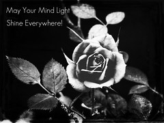 May Your Mind Light Shine Everywhere! (snap713) Tags: rose quote musashisgarden