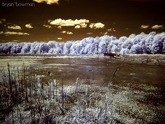 another world (BryanBowman) Tags: trees ir photography infrared