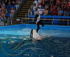 Unna8 (GypsySkye7) Tags: sanantonio believe orca seaworld shamu killerwhale unna captivity shamurocks