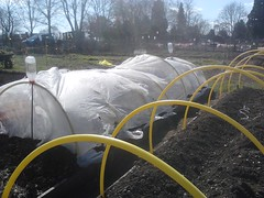 Plot 12A - Potatoes covered with fleece 02-04-2013 (Davy1000) Tags: carrots leeks broadbeans onionsets earlypotatoes april2013 plot12a lettucelittlegem halfbed beetrootchioggia potatoesrocket