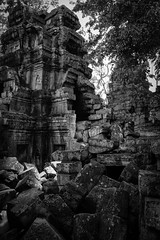 shadows of Ta Phrom (Traveling Jack) Tags: travel tree contrast canon photography photo cambodia bricks kitlens siem reap traveling siemreap angkor wat ta rubble traveler phrom travelphotography 600d angko phrome