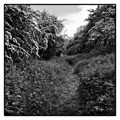 The Old Railway Line . (wayman2011) Tags: bw landscapes railways pennines teesdale stainton fujifilmx10