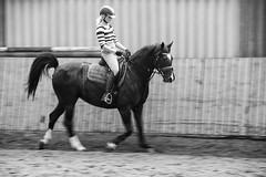 untitled (Anna-logisch) Tags: bw horse moving reiter sw rider pferd