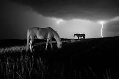 IMGP6731-stavrosstam (stavrosstam) Tags: horses bw storm night ldlnoir