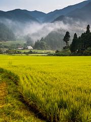 PhoTones Works #3285 (TAKUMA KIMURA) Tags: trees house mist mountain flower nature field landscapes rice scenic       kimura    takuma    gh3  photones