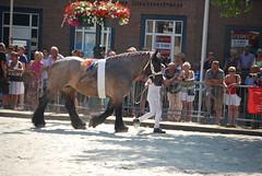 trekpaardkeuring ijzendijke 21072013 3793 (jo_koneko_san) Tags: horses horse holland netherlands cheval nederland zeeland chevaux paard hollande zeeuwsvlaanderen 2013 ijzendijke parden trekpaard zeeuwstrekpaard trekparden