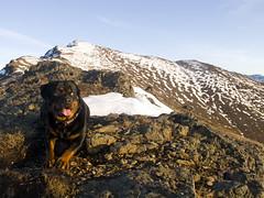 (bristolowl) Tags: dog alaska canon zoe peak rottweiler anchorage g12 wolver