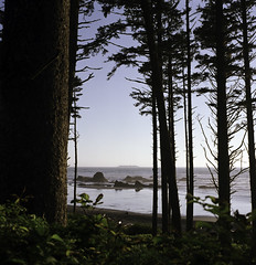 a peek. (tumbleweed.in.eden) Tags: ocean film analog mediumformat nationalpark fuji pacific august hasselblad pacificocean pacificnorthwest fujifilm olympicnationalpark westcoast pnw fujipro400h 503cx tumbleweedineden cararosephotos believeinfilm carafarnell bluemooncameradeveloped bluemooncamerascanned