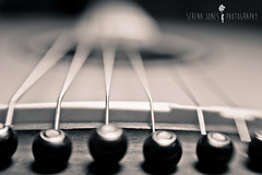 Wire Strings (Serena178) Tags: music macro wire bokeh guitar instrument acoustic strings macromonday