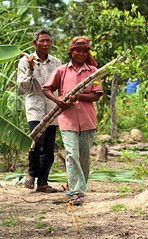 Gathering sugarcane (World Bank Photo Collection) Tags: old food woman man rural walking couple asia cambodia southeastasia cambodian married walk farm agrarian farming husband elderly land wife crops aged farmer agriculture seniorcitizen kampongthom