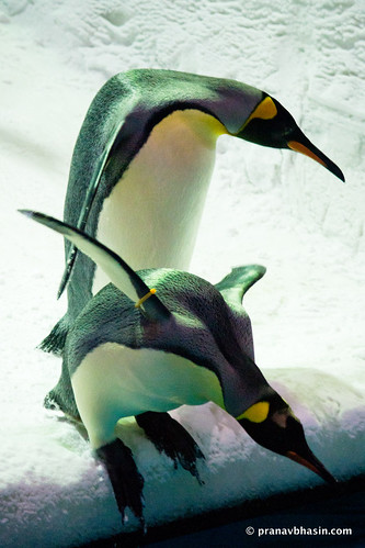 The Gentle Nudge, Emperor Penguins At Ski Dubai, Mall Of Emirates, Dubai
